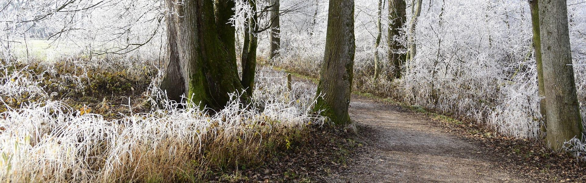 weg_und_frost